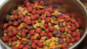 dlaczego pies nie chce jeść suchej karmy