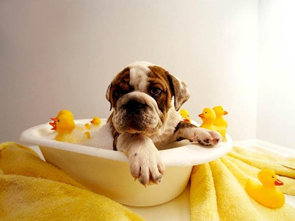 jak często kąpać psa