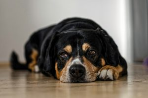 brak apetytu u psa
