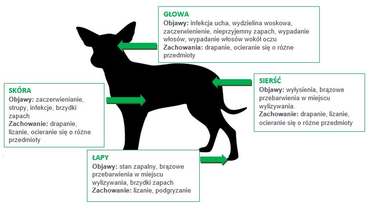 alergia pokarmowa u psa