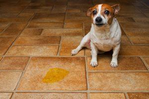 nauka psa sikania na matę