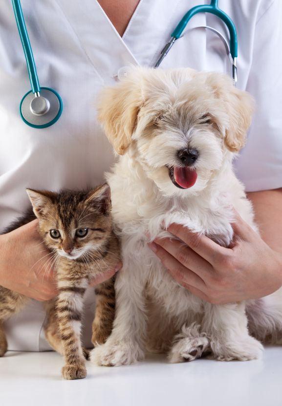 nużyca u psa - leczenie