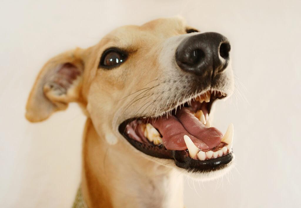 mycie zębów psa
