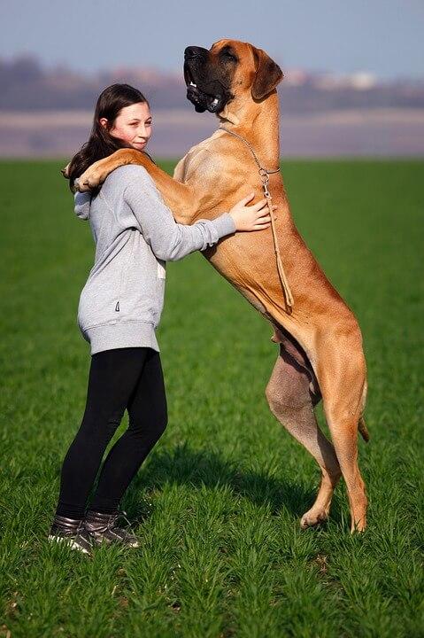jak oduczyć psa skakania na gości