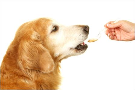 tran dla psa