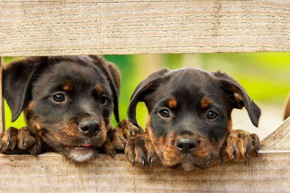 przyczyny nadpobudliwości u psa