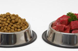 sznaucer miniaturowy żywienie