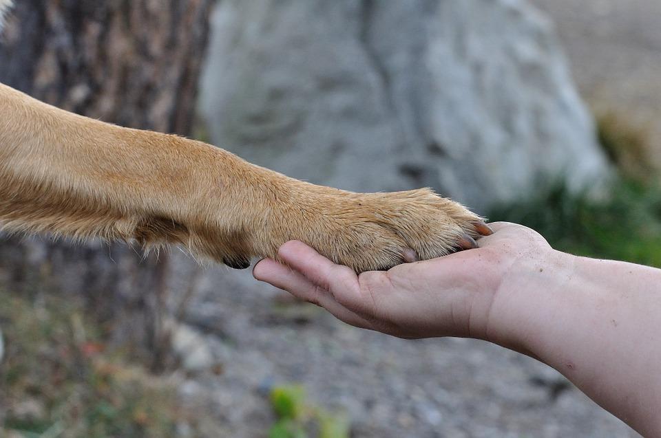 jak nauczyć psa komendy daj łapę