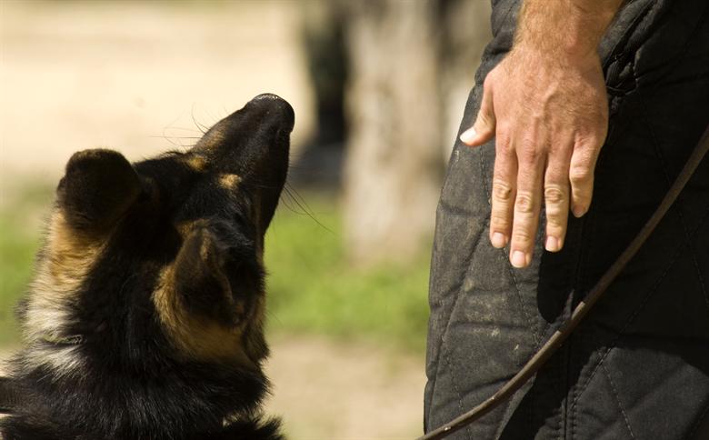 agresja u psa wobec innych psów