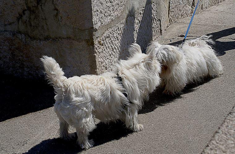 agresja u psa - co robić