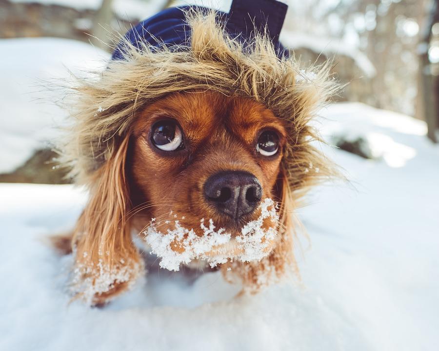 pielęgnacja psa zimą