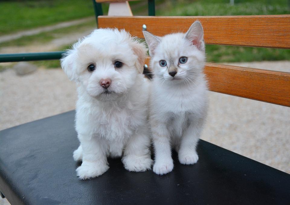 pies i kot pod jednym dachem